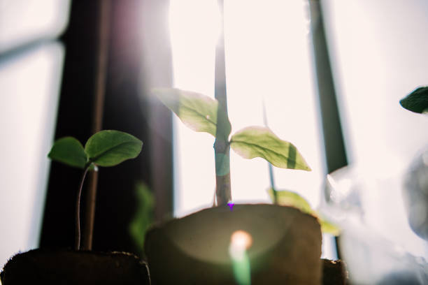Seedling in bright sunlight.