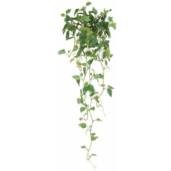 観葉植物 つる性 インテリアグリーン
