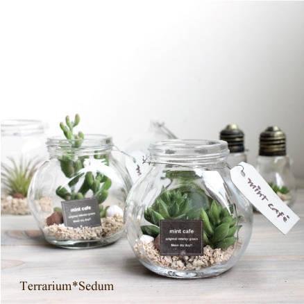Terrarium *テラリウム * セダム*2種