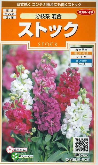 花の種 ストック 分枝系混合 小袋 サカタのタネ