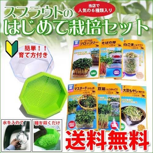 スプラウト 栽培セット 自由研究に最適 【 はじめて栽...
