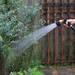 ガーデニングのプロが選んだおすすめツール「水やり道具」 - ガーデニングのいいモノ見つかる Garché