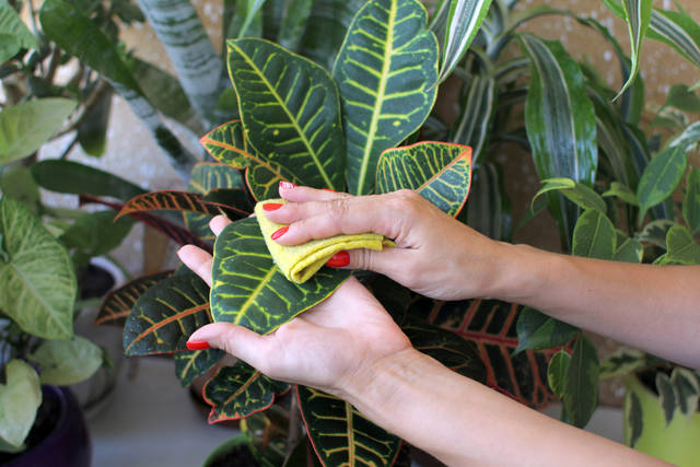 観葉植物でガーデニングをもっとおしゃれに!観葉植物専用の培養土をご紹介