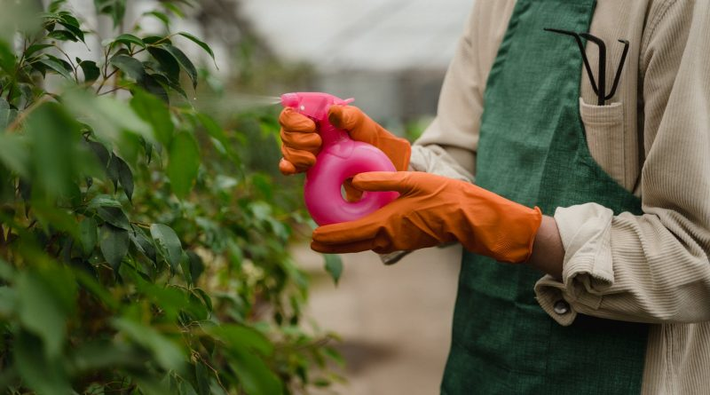person holding spray bottle watering the plants